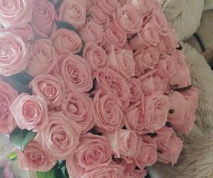 beautiful, pink, and rose image