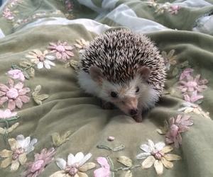 animal, flowers, and hedgehog image