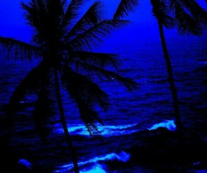 blue, beach, and palm trees image