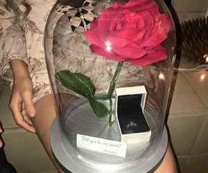 rose, flowers, and ring image