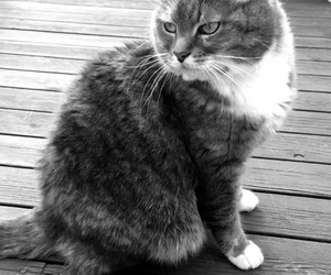 black&white, fluffy, and dorris image