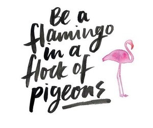 flamingo and quotes image