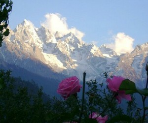 flowers, mountains, and view image