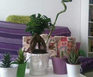 bamboo, hippie, and boho image