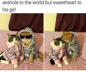 funny, cute, and cat image