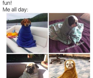 dog, funny, and hilarious image
