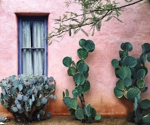 cactus, pink, and love image