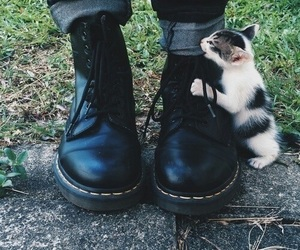 cat, grass, and shoes image