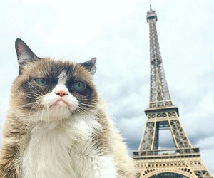 cat, cats, and travel image