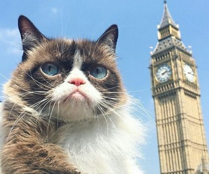 cat, cats, and london image