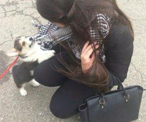 animal, dog, and girl image