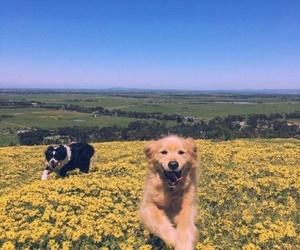 animal, dog, and happy image