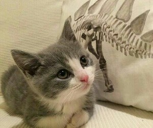 beautiful, cat, and little image