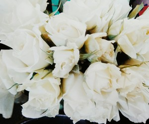 rose and white roses image