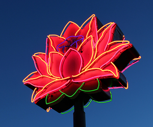 flowers, neon, and red image