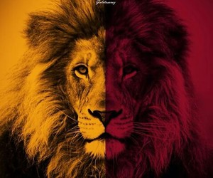 galatasaray, lion, and red image