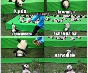 meme, humor, and panda image