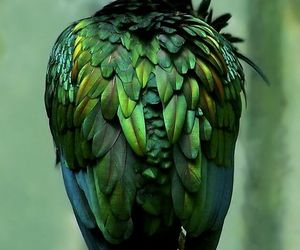 bird, green, and feather image