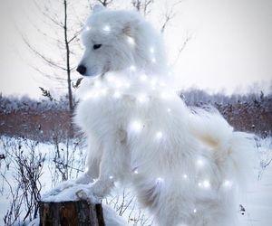 dog, animal, and lights image