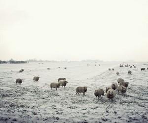 animals, iceland, and nature image
