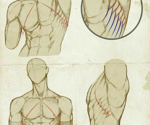 arms, chest, and sketches image
