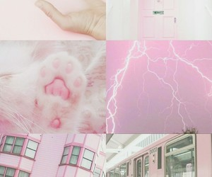 aesthetic, cat, and kitten image