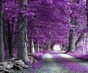 leaf, purple, and tree image