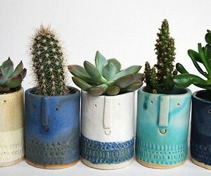 cactus, plants, and tumblr image