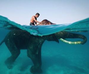 blue, sky, and elephant image