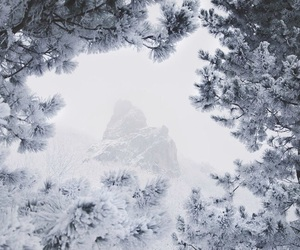 beauty, nature, and snow image