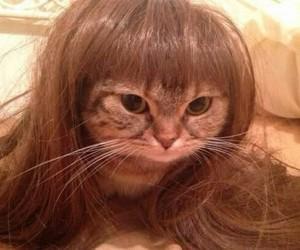 animal, sfondi, and gatti image