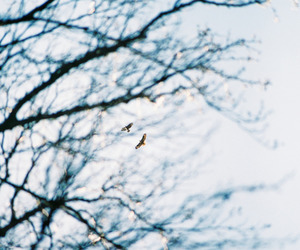 35mm, birdwatching, and canon image