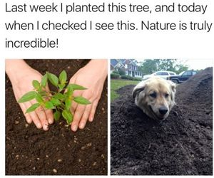 dog, lol, and nature image