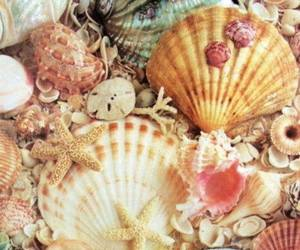 food, pretty, and sea creatures image