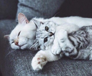 cats, gato, and cute image