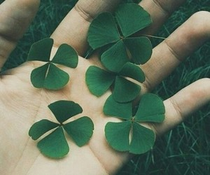 green, clover, and nature image