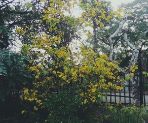 flower, tree, and hoa mai image