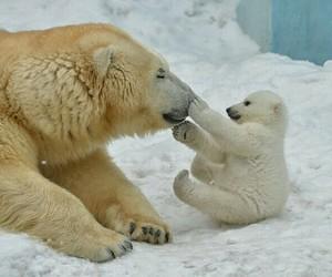 animals, photography, and Polar Bear image