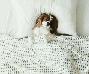 dog, bed, and sleep image