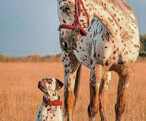 dog, horse, and friends image