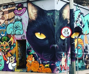 bogota, colombia, and Gatos image