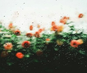 flowers, rain, and nature image