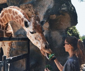 animal, giraffe, and summer image
