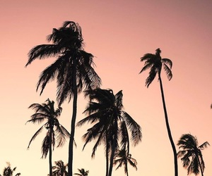 beautiful places, summer, and sunset image