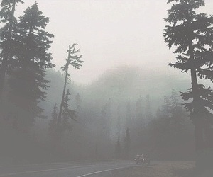 forest, grunge, and fog image