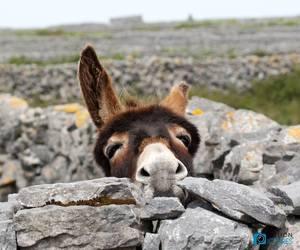 baby animals, cute animals, and donkey image