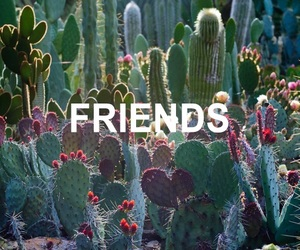 cactus, paradice, and flowers image