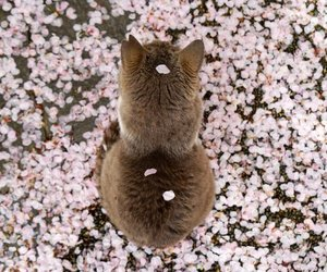 animal, cat, and flower petals image