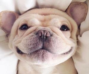 animal and mood image