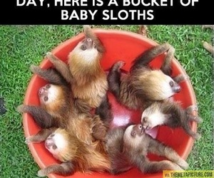 sloth and baby image